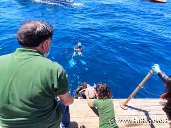Gaeta: in fondo al mar, le tartarughe Greta e Alive finalmente libere - Tutto Golfo