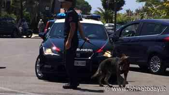 Perquisizioni domiciliari a Gaeta: i cani dei carabinieri fiutano la droga - LatinaToday