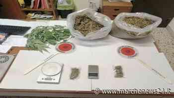 Macerata, detenzione e spaccio di marijuana: arrestato 58enne - Marche News 24