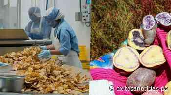 Huancavelica: Papas nativas para chips conquistan la industria en Europa - exitosanoticias