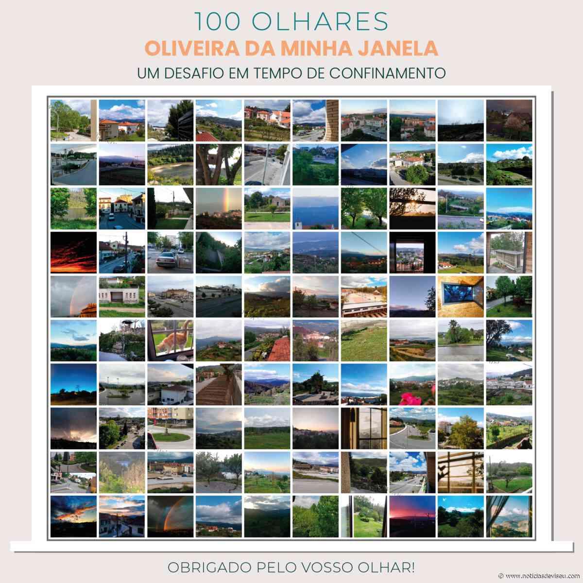 100 OLHARES – OLIVEIRA DA MINHA JANELA, UM DESAFIO EM TEMPO DE CONFINAMENTO - Notícias de Viseu