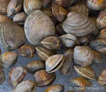 Bacoli, vongole pescate nel lago pieno di liquami e metalli pesanti: scatta il sequestro - Napoli Fanpage.it