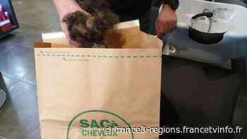 """Remiremont : vos cheveux coupés sont récupérés par l'association """"Coiffeurs Justes"""" pour lutter contre l - France 3 Régions"""