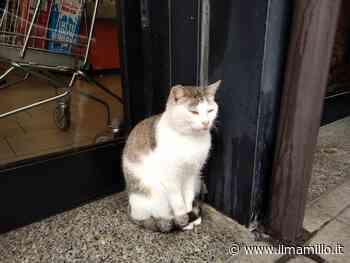Ariccia, si cerca ancora la gatta scomparsa dalla colonia felina di via delle Cerquette - ilmamilio.it - L'informazione dei Castelli romani
