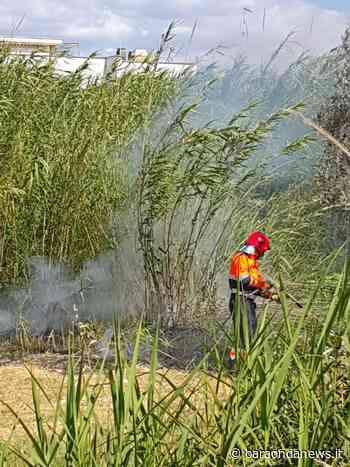 Cerveteri, incendio di sterpaglie domato dai VVF - BaraondaNews