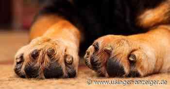 Neuer Kurs für Hundehalter in Usingen - Usinger Anzeiger
