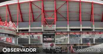 Benfica convida adeptos a encherem o estádio da Luz com cachecóis - Observador