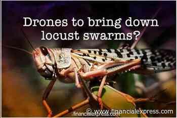 Drones, planes to counter locust attack? Govt set to bring down crop-devouring locust swarm, details here