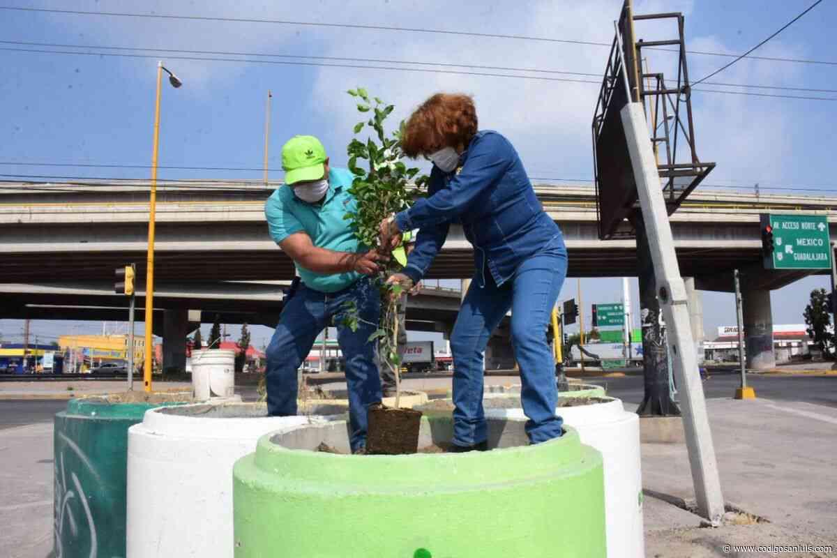 Arranca campaña de reforestación en Soledad - Código San Luis