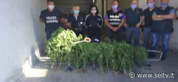 Eboli: sequestrata marijuana nei pressi del Sele. Si indaga - SeiTV