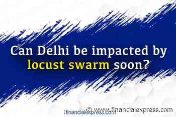 Locust attack on Delhi? Is capital under threat of locusts swarm anytime soon? Check details