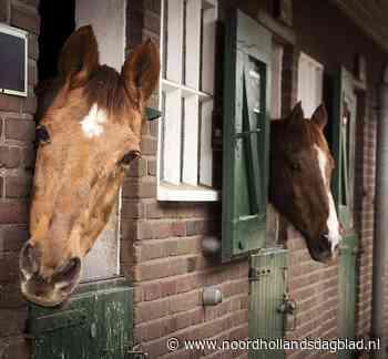 De Paardenkamp in Soest gooit 2 juni poort weer open na coronasluiting; theetuin blijft nog maanden dicht door lange procedure gemeente - Noordhollands Dagblad