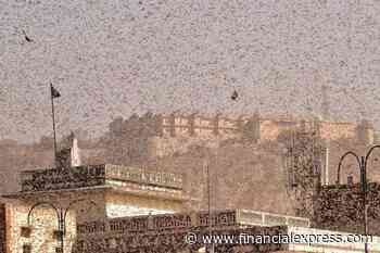 Why is locust infestation a problem in India this year? Reason, future course explained
