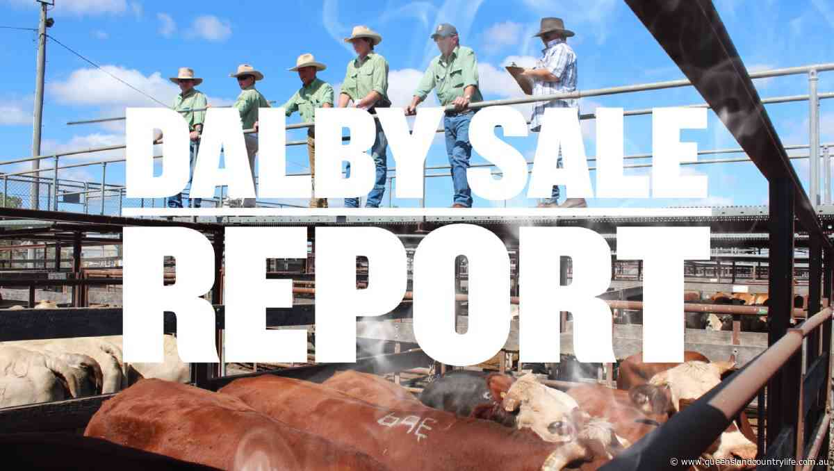 Light weight yearling steers make 478c, average 430c at Dalby - Queensland Country Life