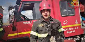 Cucciolo caduto nel pozzo salvato dai vigili del fuoco a Vittoria - Vittoria - CorrierediRagusa.it