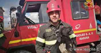 Vittoria, cucciolo di cane caduto in un pozzo: vigili del fuoco lo salvano - La Sicilia