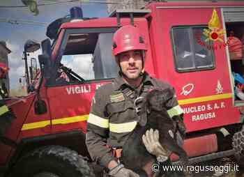 Vittoria: i vigili del fuoco recuperano un cucciolo caduto in un pozzo profondo oltre 30 metri. VIDEO - Ragusa Oggi