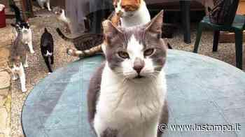 Appello dell'Enpa: cercasi stufa per il gattile di Albissola Marina - La Stampa