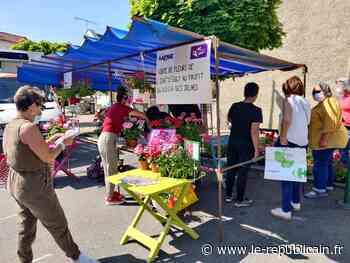 Essonne : vente de fleurs à Breuillet et Saint-Chéron - Le Républicain de l'Essonne