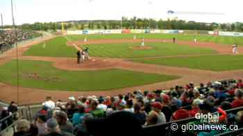 Okotoks Dawgs left disappointed after 2020 WCBL season cancelled   Watch News Videos Online - Globalnews.ca