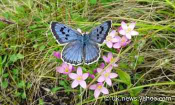 Butterflywatch: May sun brings hope for a bumper summer