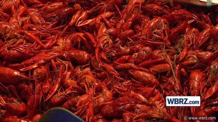 Crawfish Tracker: Prices in a pinch to end the season
