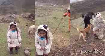 """Una ternura: Niña hace dramatización del """"Lobo y la oveja"""" junto a su familia en Cerro de Pasco - Diario Perú21"""
