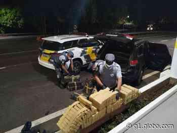 Polícia apreende 365 quilos de maconha na Rodovia Assis Chateaubriand em Braúna - G1