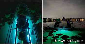 You Can Explore A Glowing Underwater Lily Forest On This Kayak Tour - Narcity USA