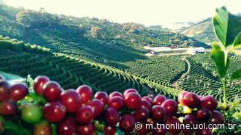 Ainda se recuperando da geada de 2013, que dizimou cerca de 70% dos cafezais do município, - TNOnline
