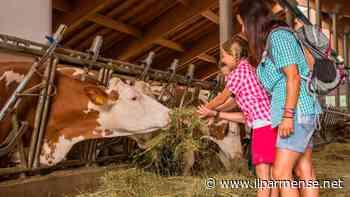 Laboratori didattici online con Coldiretti Parma: attività dedicate ai più piccoli - Luca Galvani