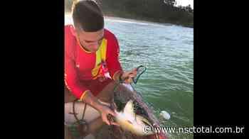 Bombeiros resgatam tartarugas presas em redes de pesca irregulares em Barra Velha   NSC Total - NSC Total