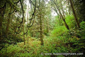 VIDEO: Maple Ridge's Kanaka Creek park expands – Maple Ridge News - Maple Ridge News