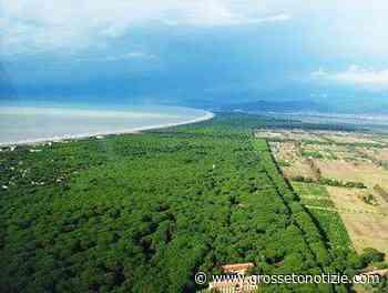 Al via il progetto per realizzare un parco didattico ambientale: sorgerà nella pineta del Tombolo - Grosseto Notizie