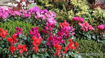 Cervia Città Giardino - Angoli Fioriti: colori dell'arcobaleno nei balconi e giardini, come simbolo di speranza - ravennanotizie.it