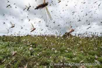 Continuous spraying of insecticides prevented new wave of locusts in Jhansi: official