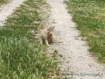 CASTELPLANIO / Spariti troppi gatti dalla colonia felina, che fine hanno fatto? - QDM Notizie