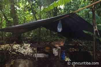 Força Verde encontra fábrica ilegal de palmitos em Morretes - CBN Curitiba - CBN
