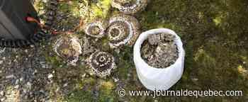 [PHOTOS] Infestation de guêpes: une très grosse année