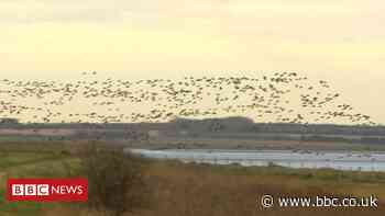 Graveney marshes giant solar farm given go-ahead