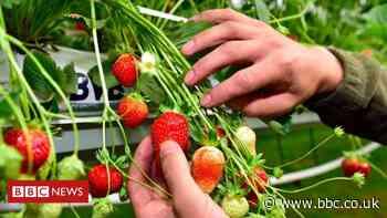 Kent: Five held over 'exploitation' of fruit pickers