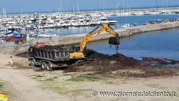 Agropoli, alghe su spiaggia: due proposte da Legambiente - Giornale del Cilento