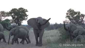 Coronavirus: Survival of 'big five' game reserve rests on return of tourists soon - Sky News