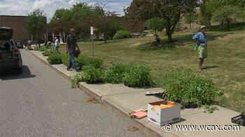 Burlington event provides free seedlings - WCAX