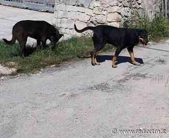 Catturati due randagi che avevano massacrato animali da cortile - Radio RTM Modica
