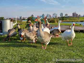 """Las aves """"coparon"""" el sector de lagunas de Punta Mogotes - Puntonoticias"""