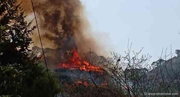 Mujer provocó incendio en 60 hectáreas de una zona protegida de México por grabar video para Tik Tok