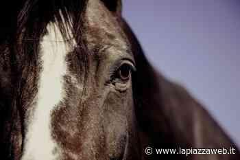 Al via a Spinea e Martellago il servizio di monitoraggio del territorio con le guardie a cavallo - La PiazzaWeb - La Piazza