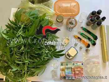 POZZUOLI/ Aveva una pianta di cannabis in casa: arrestato 29enne di Monterusciello - Cronaca Flegrea