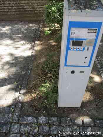 Krähenplage in Xanten - Wer löst das Problem? - Xanten - Lokalkompass.de